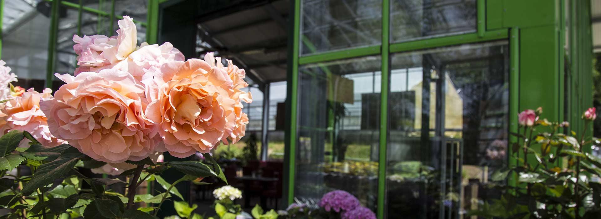 Blumengestecke für Gross und Klein bei Blumen Bachhubers Florale Welten in Zwiesel