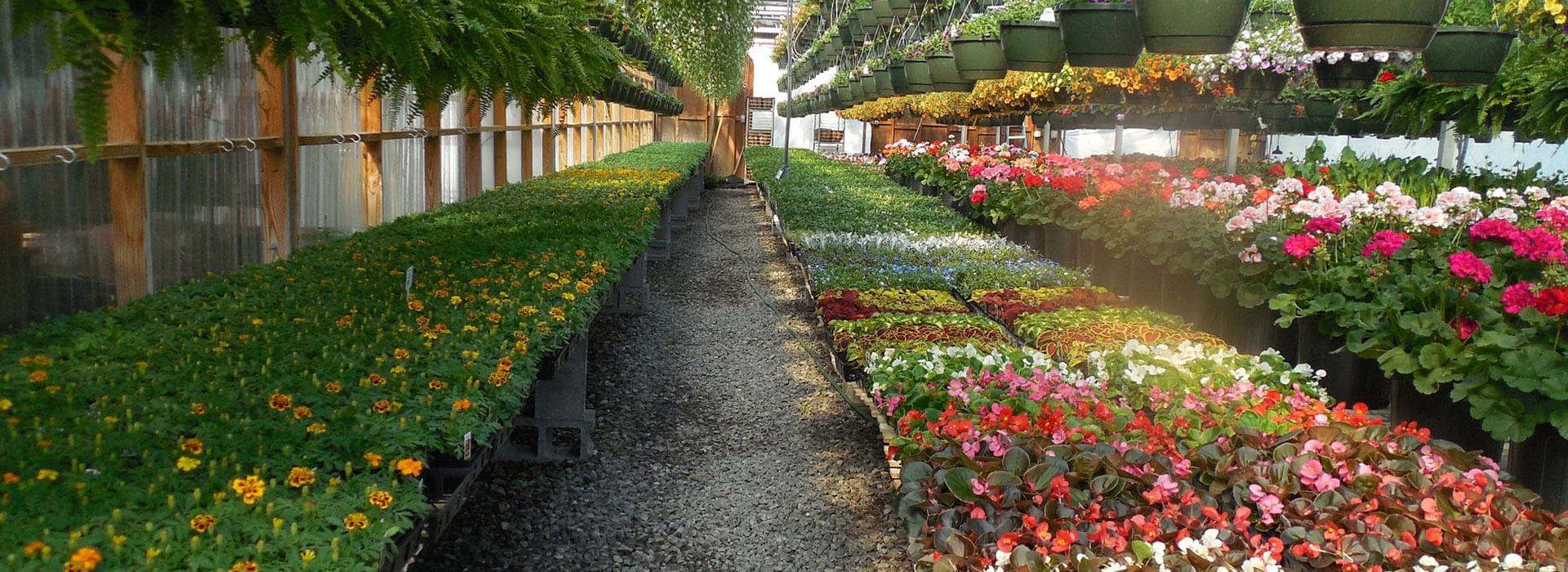 Das atemberaubende Gewächshaus bei Blumen Bachhubers Florale Welten in Zwiesel