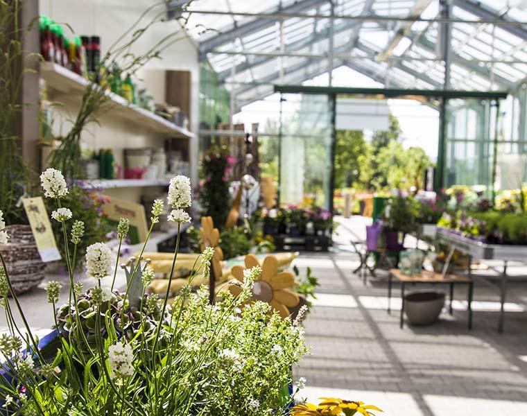 Blumen für jeden Anlass bei Blumen Bachhubers Florale Welten in Zwiesel