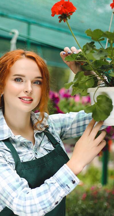 Eine Vielzahl an Topfpflanzen bei Blumen Bachhubers Florale Welten in Zwiesel
